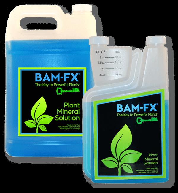 BAM-FX